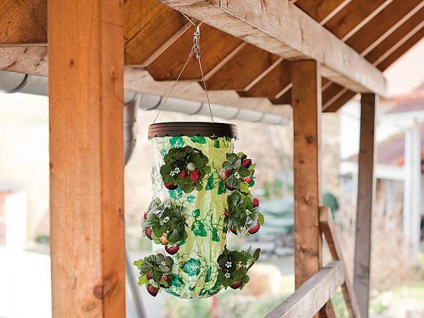 Erdbeere Auf Dem Balkon : Cn pflanz ampel für erdbeeren ideal balkon ...