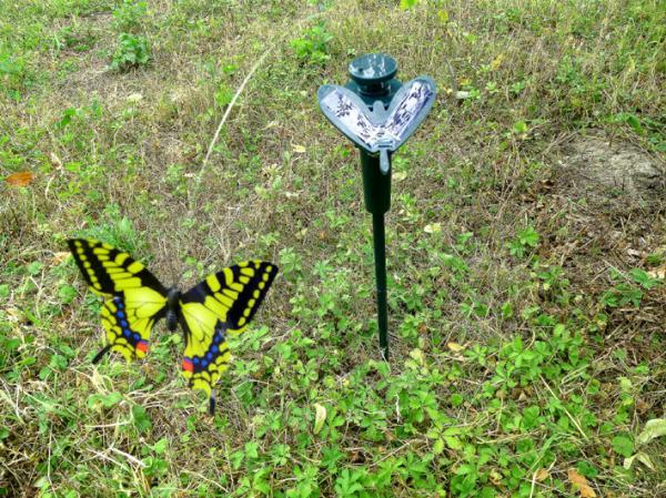 Solar Schmetterling