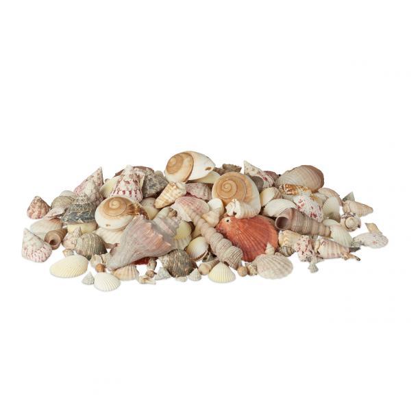 Muschel Deko mit Meeresschnecken 2kg