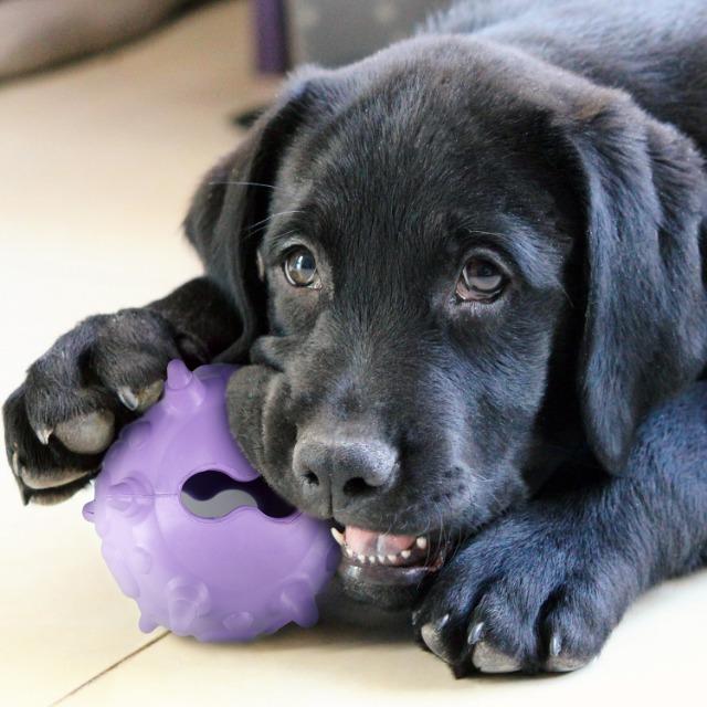 Restposten / Sonderposten (A-Ware) >60% Rabatt zum UVP (Hundspielzeug) | remaining stock / dog toy